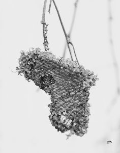 Wasp Nest Community Heart by Tonya M. Brill, Artist and Photographer on Time Made Beautiful, Metallic Photographic Print, Monochrome, black and white, wall art, tabletop art